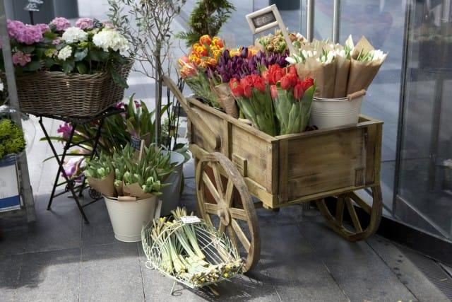 come-coltivare-tulipani (5)