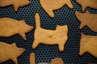 Biscotti fai da te per gatti, la ricetta sana e nutriente con formaggio e verdure