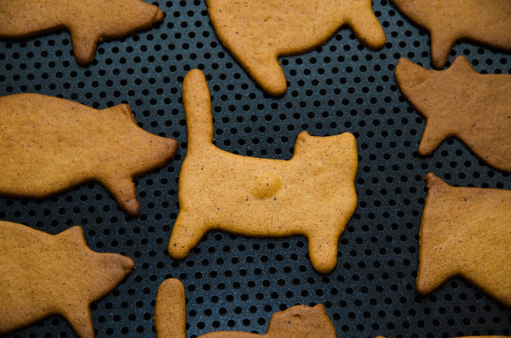 ricetta biscotti fai da te per gatti