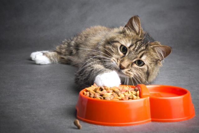 Cibo per gatti fatto in casa: due ricette per preparare scodelline sfiziose e nutrienti