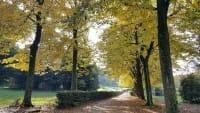 Le foglie e i colori dell'autunno: un dolce calpestio che ricorda la nostra fragilità (foto)