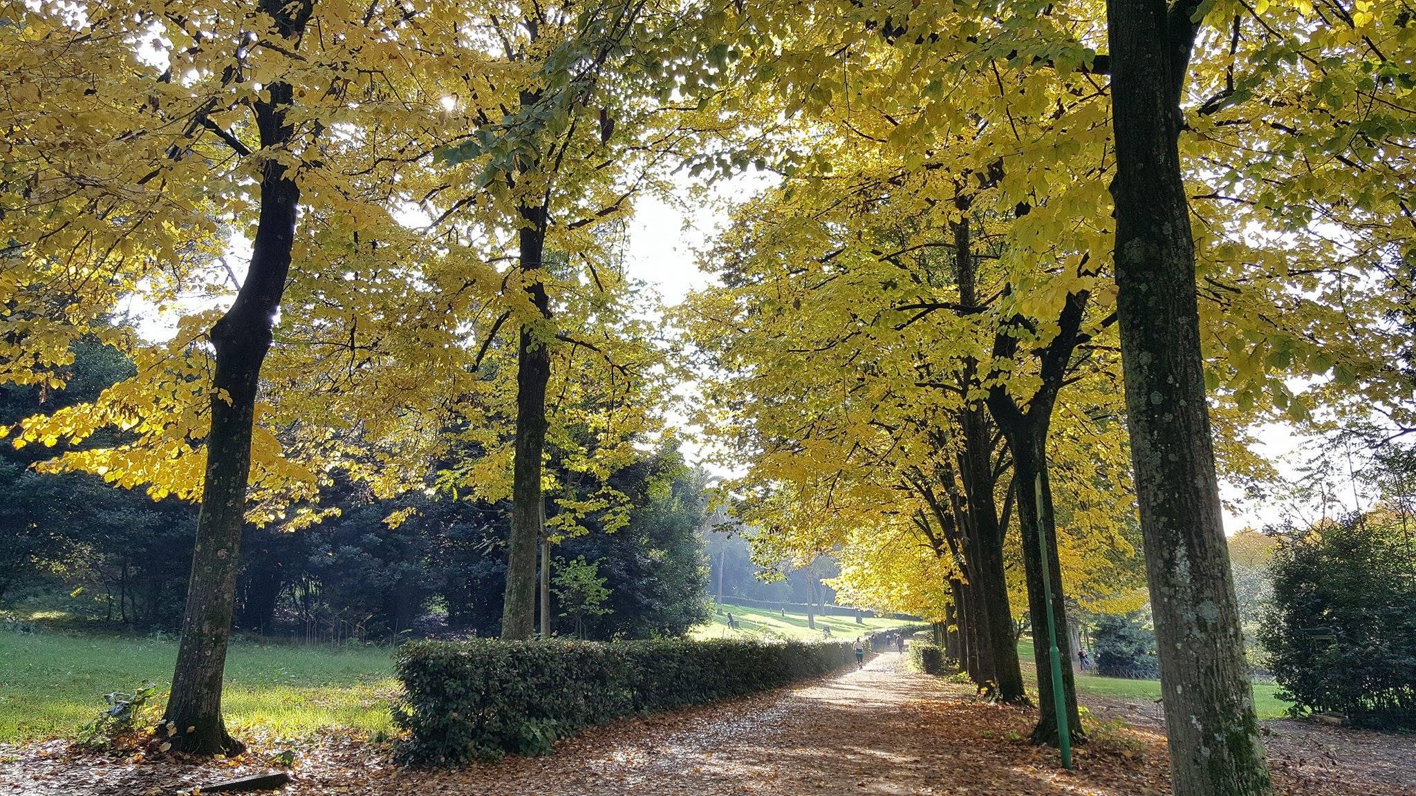 Foliage, i percorsi più belli in Italia. A piedi, in bicicletta, e in treno