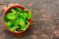 Come curarsi con l'ortica, tutti i benefici per la salute e la ricetta di una nutriente zuppa