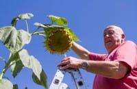 A Fogliano Redipuglia due pensionati si prendono cura di un orto dei miracoli (Foto)