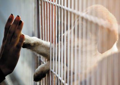 come adottare un animale
