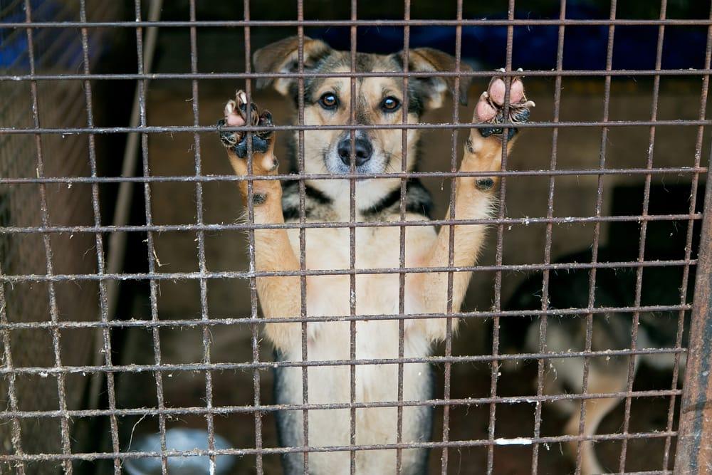 come-adottare-un-animale (9)
