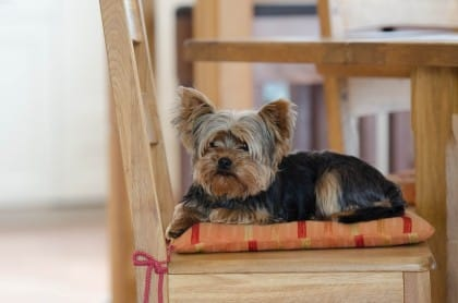 come scegliere l'assicurazione per animali domestici