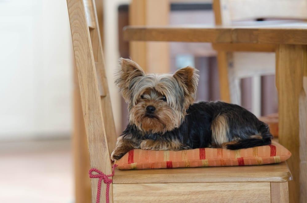 Assicurazione per gli animali domestici: quando è necessaria e come evitare salassi