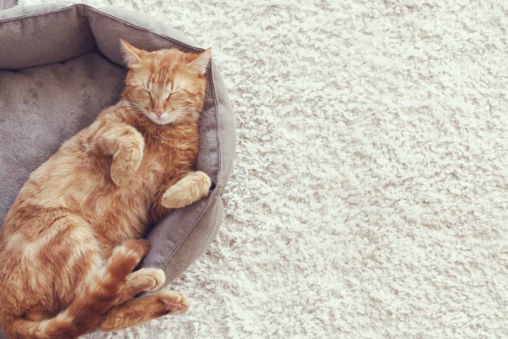 come-scegliere-assicurazione-per-animali-domestici (2)