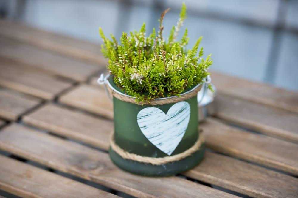 come scegliere vaso piante