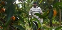Aranciamoci, il progetto per recuperare i terreni abbandonati e combattere il caporalato (foto)