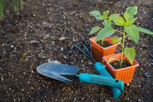 Lavori nell'orto a gennaio, tutti gli ortaggi da seminare. E le erbe da raccogliere
