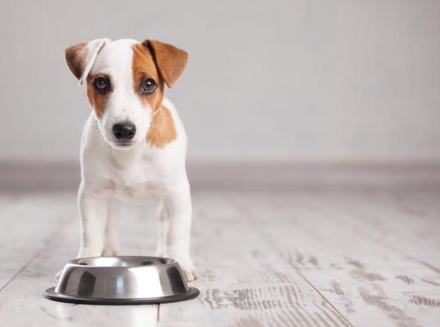 Come e quanto dare da mangiare ai cani: 10 errori da evitare per una dieta equilibrata