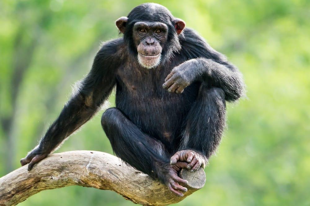 Animali a rischio estinzione