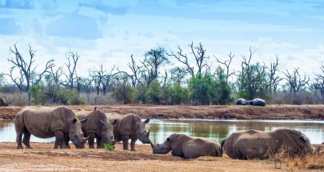 come-evitare-estinzione-animali-progetto-photo-ark-joel-sartore (11)