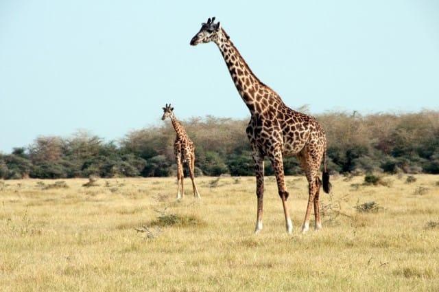 come-evitare-estinzione-animali-progetto-photo-ark-joel-sartore (13)