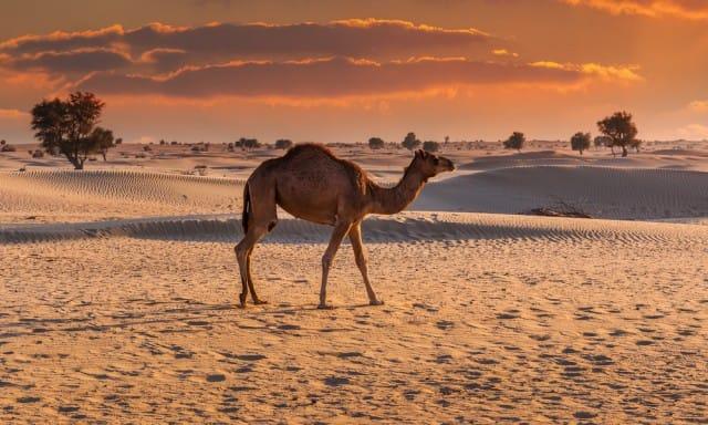 come-evitare-estinzione-animali-progetto-photo-ark-joel-sartore (16)