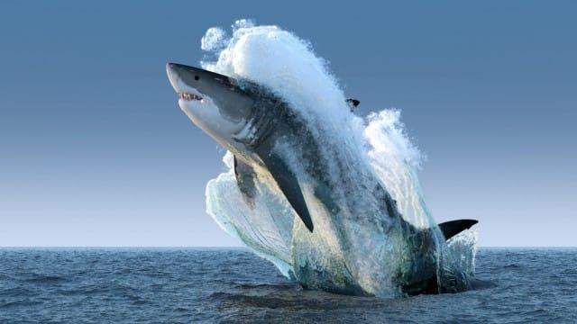 come-evitare-estinzione-animali-progetto-photo-ark-joel-sartore (3)