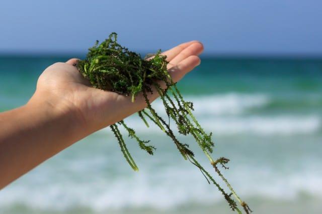 Tutti i benefici delle alghe e il progetto per ricavarne cosmetici e fertilizzanti