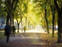 La mappatura degli alberi cittadini per spronare le amministrazioni a fare di più