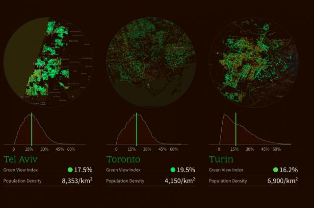 alberi_cittadini2