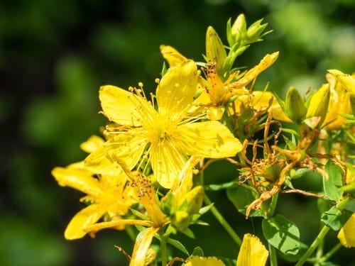 piante-antistress-quali-sono-benefici (5)