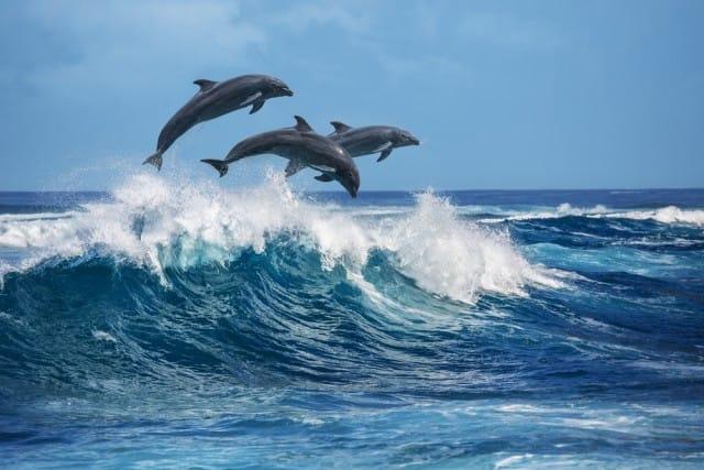 Ragionevolezza e meno burocrazia: la ricetta di Fulco Pratesi per il problema delfini alle Eolie