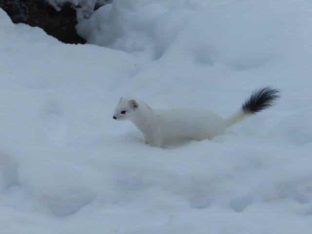 aurora-boreale-finlandia-la-coda-delle-volpi-fabrizio-carbone (3)