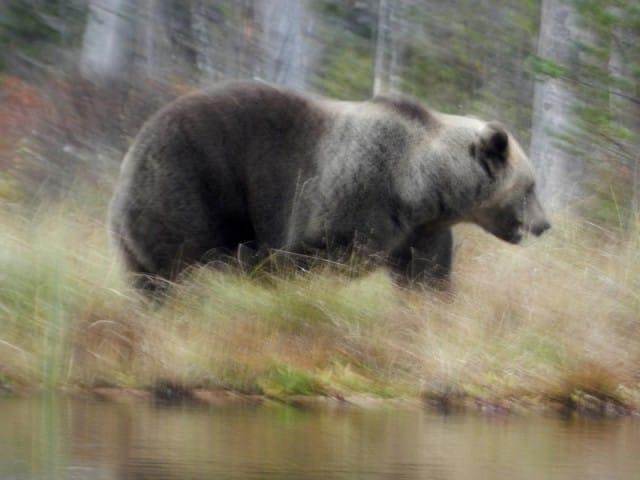 aurora-boreale-finlandia-la-coda-delle-volpi-fabrizio-carbone (4)