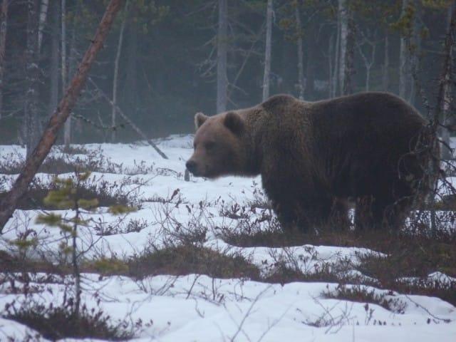 aurora-boreale-finlandia-la-coda-delle-volpi-fabrizio-carbone (6)