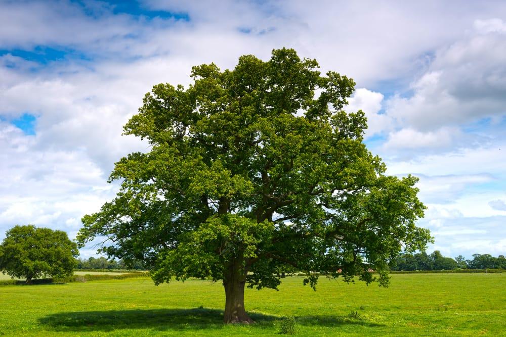 come parlano gli alberi