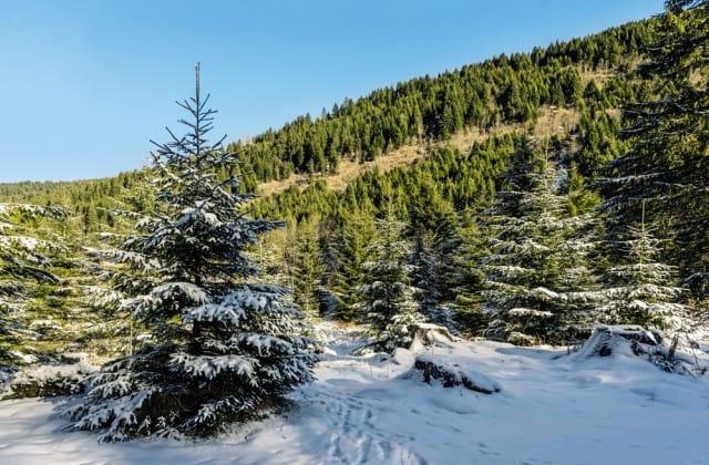 come-parlano-alberi-significato-simbolico (2)