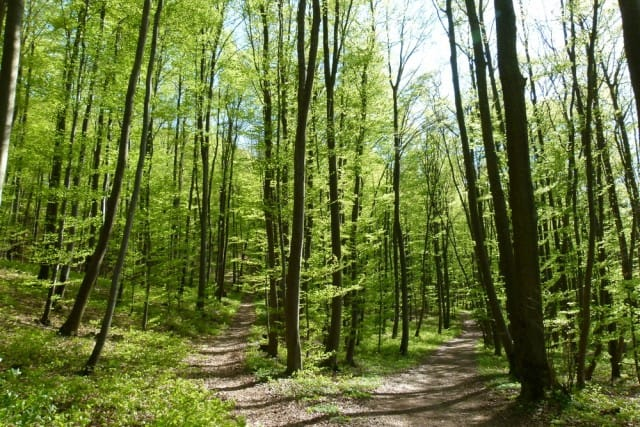 come-parlano-alberi-significato-simbolico (3)