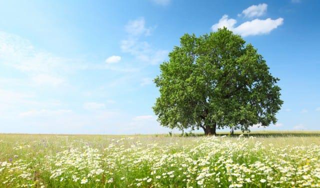 come-parlano-alberi-significato-simbolico (4)