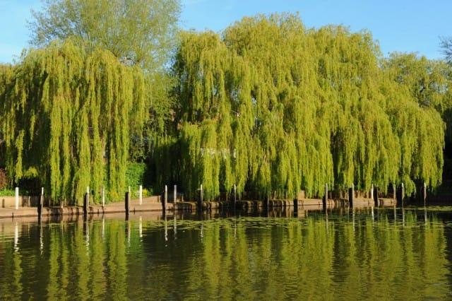 come-parlano-alberi-significato-simbolico (5)
