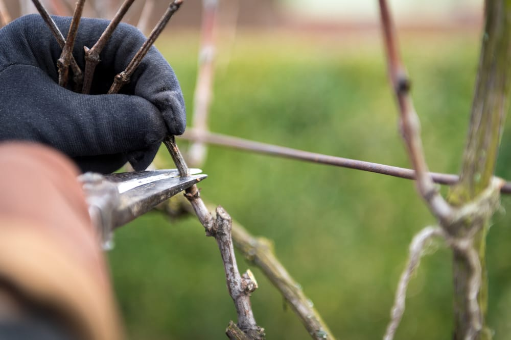 Come Potare Piante : Come potare le piante non sprecare