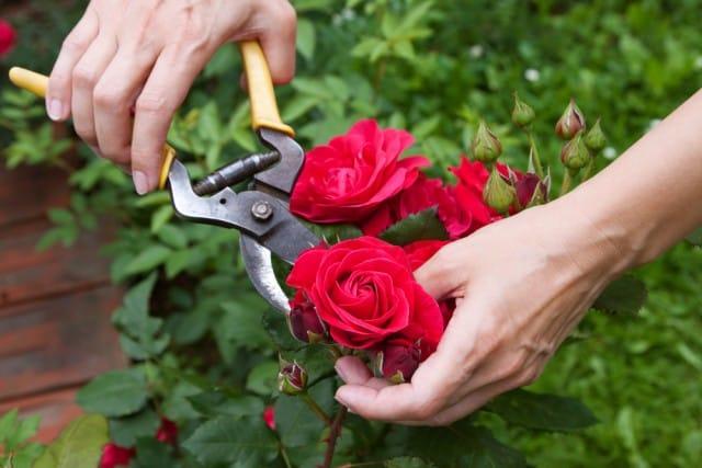 Periodo Per Potare Le Piante : Come potare le piante non sprecare