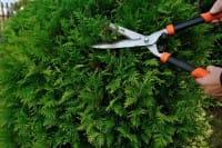Come potare le piante: le diverse tecniche, gli attrezzi e i periodi giusti per procedere