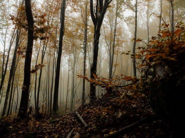 Foreste pi belle italia non sprecare for Le piu belle fotografie