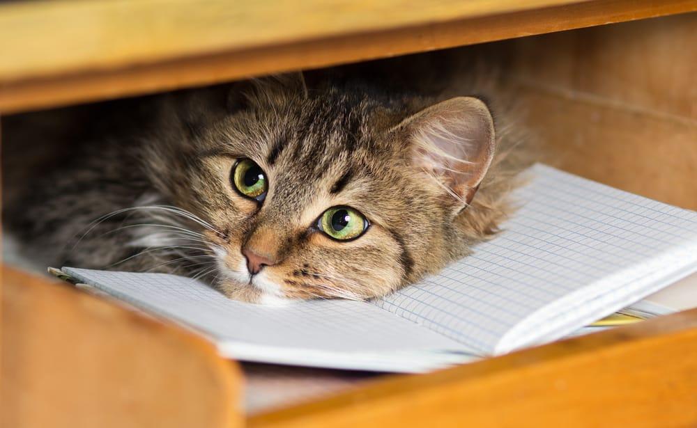 Giochi fai da te per gatti non sprecare - Cucina casalinga per gatti ...