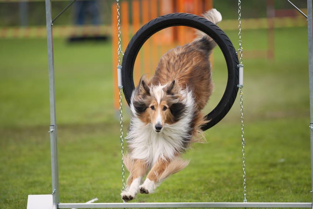 sport-con-cani-2