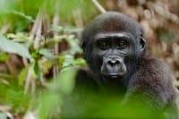 Animali in via di estinzione, più della metà sono a rischio: l'allarme dei biologi di tutto il mondo (foto)