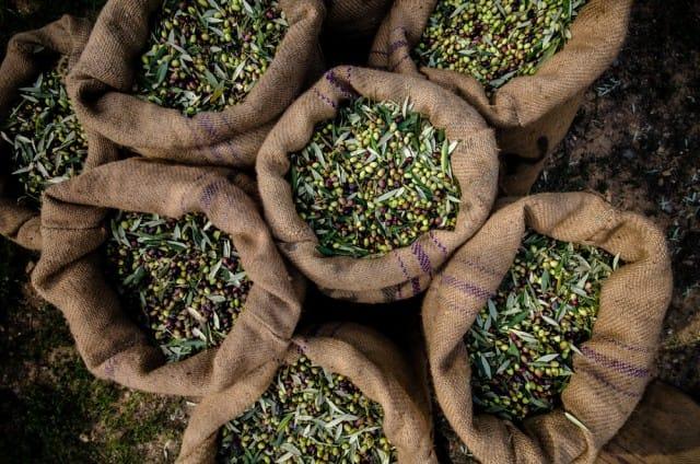come-riconoscere-un-buon-olio-extravergine-oliva (3)