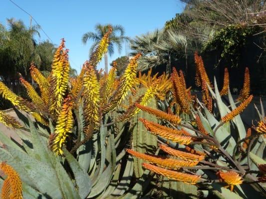 floracult-roma-casali-del-pino-mostra-mercato-giardinaggio (13)