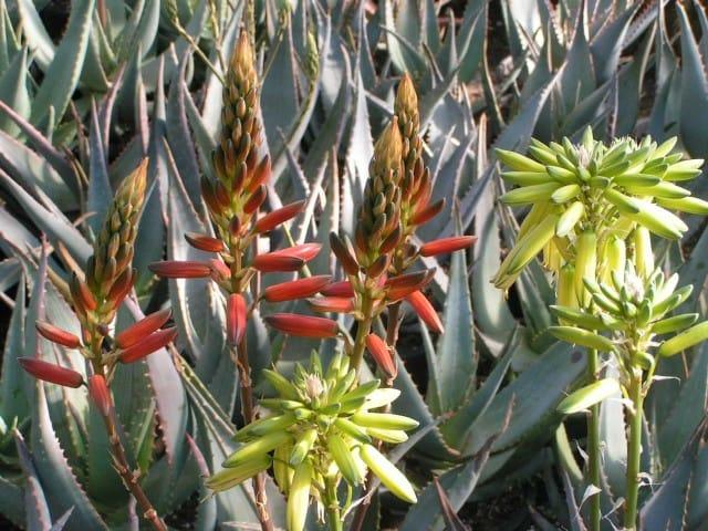 floracult-roma-casali-del-pino-mostra-mercato-giardinaggio (5)