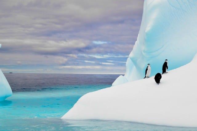 Parchi marini più belli del mondo - Antartide