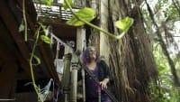 A Miami una donna combatte per rimanere a vivere sulla sua casa sull'albero (Foto)