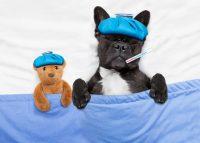 Raffreddore nei cani: come riconoscerlo e curarlo senza ricorrere ai medicinali. Molta acqua, brodo caldo e granuli di propuli