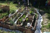 Agro-ecologia urbana: il progetto che riporta i cittadini di Milano a contatto con la natura