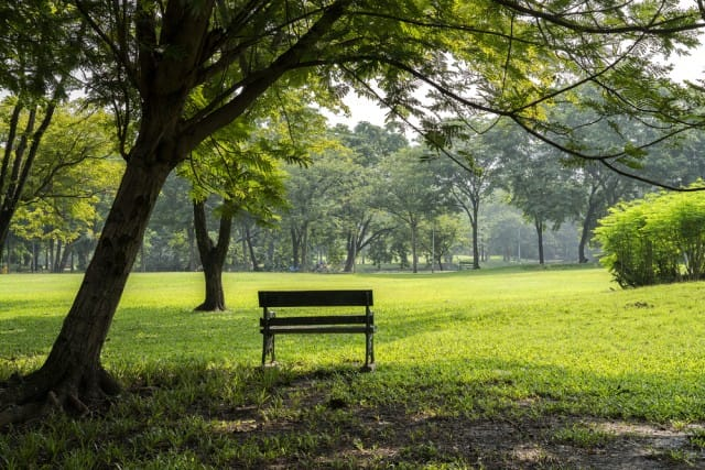 alberi-adottati-dai-cittadini (1)